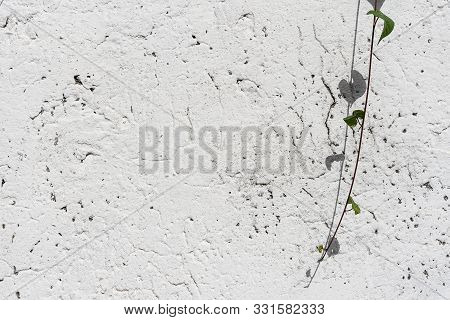 Abstract Background With White Wall And Ivy Twigs.