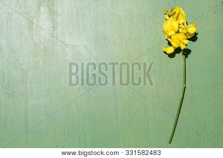 Flower Of Peavines -lathyrus - On The Wooden Background