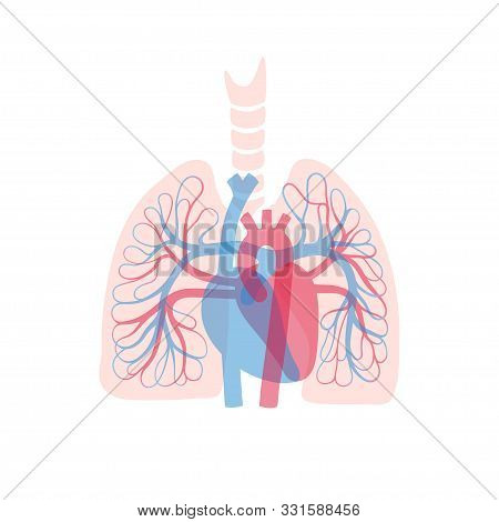 Vector Isolated Illustration Of Human Arterial And Venous Circulatory System In Lung Anatomy. Blood