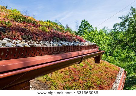 Extensive Green Ecological Living Sod Roof Covered With Vegetation Mostly Sedum Sexangulare, Also Kn