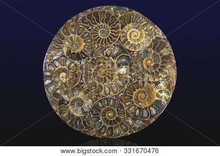 Closeup Of An Ammonite Prehistoric Fossil - Detail