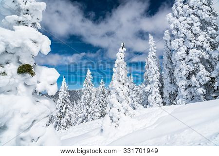 Winter Wonderland Entire Forest Covered In Deep Powder Snow , Amazing Weather Event. Climate Change