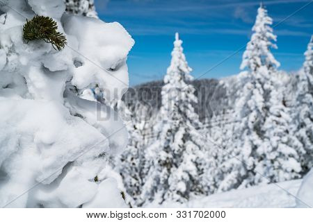 Thick Powder Snow Close Up On Trees Covered In Winter Snow. On Top Of The Mountain. Santa Fe Mountai