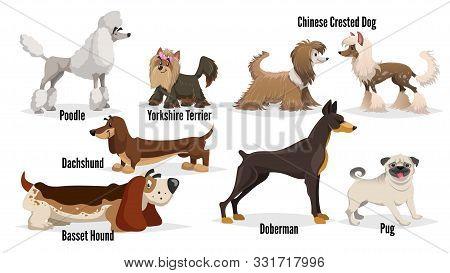 Cute Cartoon Dogs Set. Poodle, Pug, Chinese Crested, Dachshund, Doberman, Basset Hound, Yorkshire Te