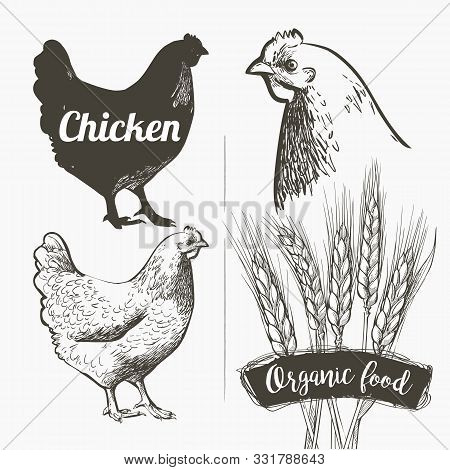 Vector Set. Hen And Rooster. Black And White Silhouette And Engraving Sketch. Male And Female Chicke