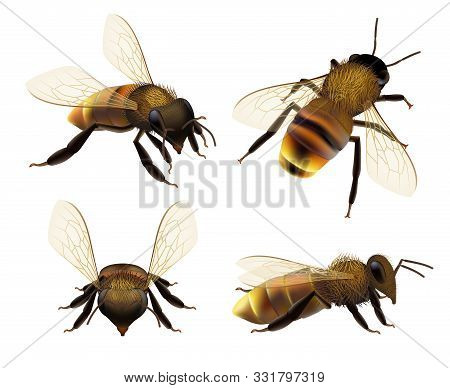 Bee Realistic. Wildlife Insect Honeybee Fly Danger Wasp Pollen Bugs Eco Natural Product Vector Colle