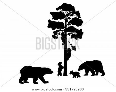 Bear Family. Silhouettes Of Animals. Vector Illustrator