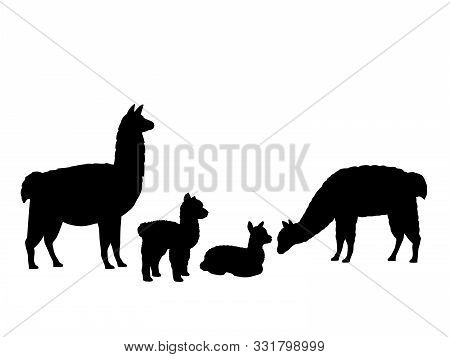 Alpaca Lama Family. Silhouettes Of Animals. Vector Illustrator