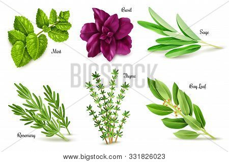 Spices Herbs Set. Set Of Herbs On A White Background, Isolated Objects, Popular Culinary Plants, Nat