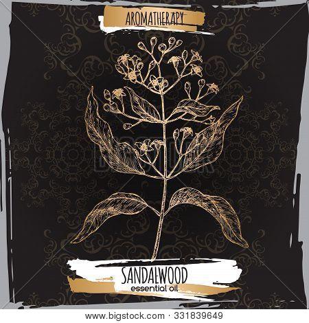 Indian Sandalwood Aka Santalum Album Sketch On Black Lace Background.