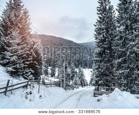 Wintery snowcovered mountain road with white snowy spruces. Wonderful wintry landscape. Travel background. Transportation