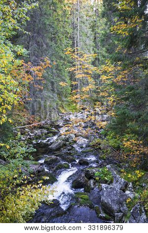 Beautiful Autumn Forest With Brook In High Tatra Mountains, Slovakia