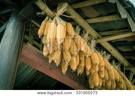 Filtered Image Organic Corn Drying On Rafters Of Barn Outbuilding In Rural North Vietnam