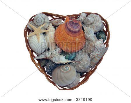 Basket Of Shells  Snails