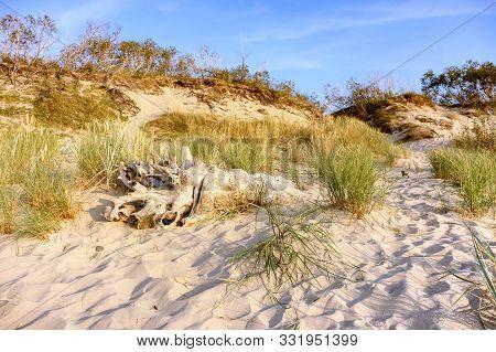 A Huge Snag On The Sand, A Tree Snag On A Sea Dune