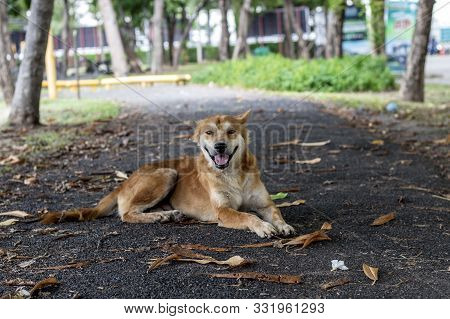 Brown And White Thin Vagrant Dog Closeup On Blur Road Background.