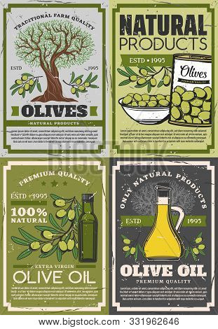 Natural Products Of Olives, Retro Extra Virgin Oil And Fruits On Branches. Vector Organic Dressing I