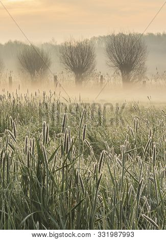 A Misty Morning On The Flanders Fields, Bergelen - Gullegem, Belgium