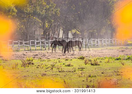 Nature Landscape With Horses On Ranch. Horses In Ranch Nature Landscape. Countryside Landscape. Dome