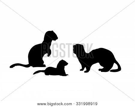 Ferrets Family. Silhouettes Of Animals. Vector Illustrator