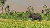 rhino walks in grass poster
