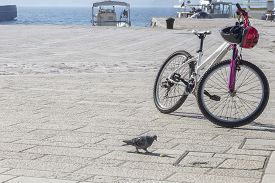 Sunny Waterfront Holiday In Fažana, Istria, Croatian With Bicycle And Pigeon In The Foreground