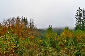 Colors Of Autumn Forest, Southern Bohemia , Czech Republic