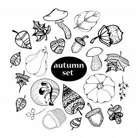 Vector Autumn Hand Drawn Set Of Mushroom, Leaf, Nut, Pumpkin, Hazelnut, Acorn. Vector Engraved Objec