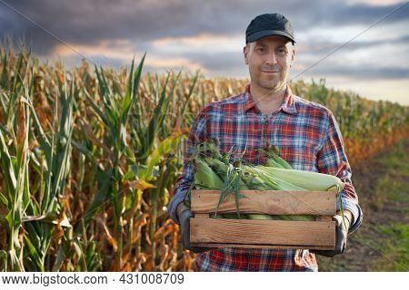 Caucasian Middle Age Farm Worker Holds Wooden Crate Of Corn Cobs In His Arms. Focus On Cobs