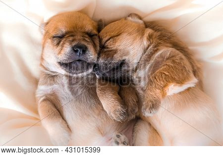 Cuddly newborn puppies in sweet dreams sleeping together