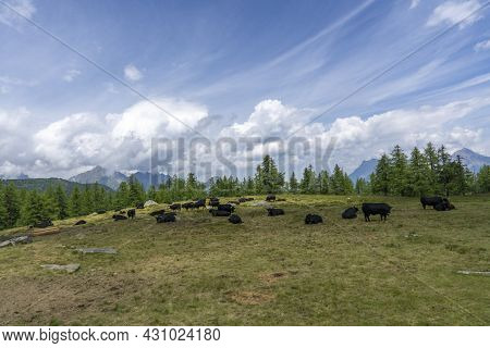 Panoramic View Of Relaxing Mountain Scenery With Mountains In The Background And Meadow, Grass On A