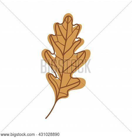 Brown Oak Autumn Leaf With Veins As Seasonal Foliage On Stem Vector Illustration