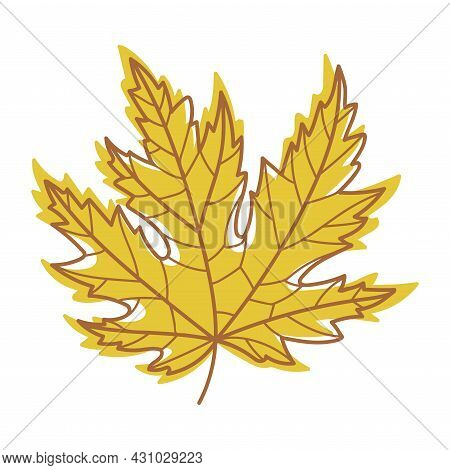 Yellow Autumn Maple Leaf With Veins As Seasonal Foliage On Stem Vector Illustration