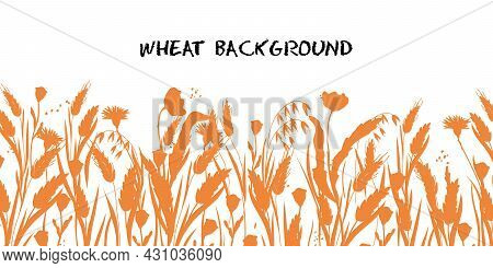 Wheat, Barley Or Rye Background. Cereal Plants For Bread Packaging, Bakery And Beer Labels, Flat Vec