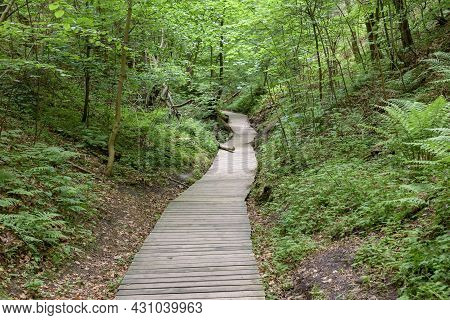 Wooden Footpath Through The Forest In Northen Poland