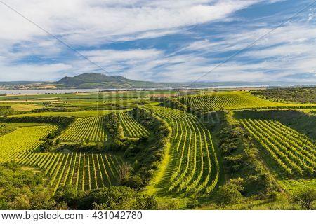 Vineyards near Nove Mlyny reservoir with Palava, Southern Moravia, Czech Republic
