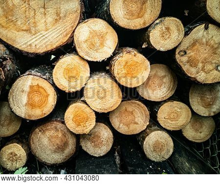 Big Wall Of Stacked Wood Logs Showing Natural Discoloration. Cut Firewood Stacked By A Wall. Close-u