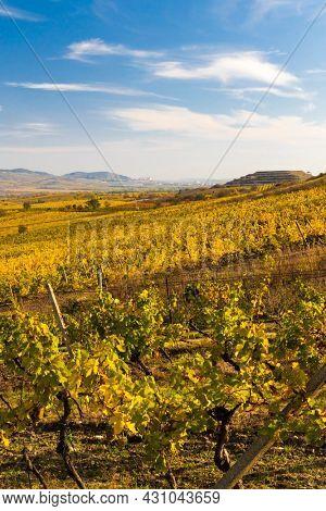 Vineyards near Dolni Dunajovice in Palava region, Southern Moravia, Czech Republic