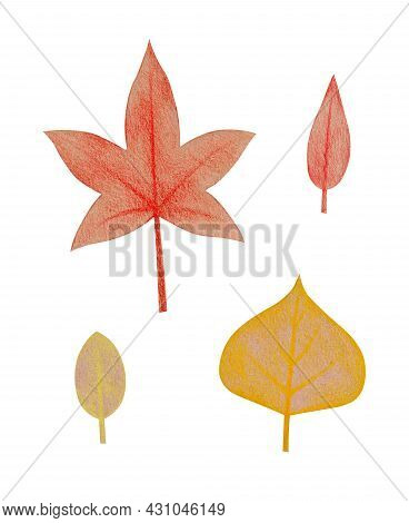 Hand Drawn Red Maple And Yellow Poplar Leaves With A Rough Texture. Isolated Plant Drawing With Colo