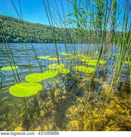 Water lilies and others plants on water surface of Lac du Val, jura France