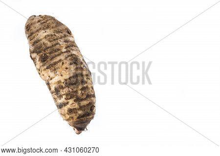 Malanga Edible Tuber - Root Of The Plant Called Colocasia Esculenta