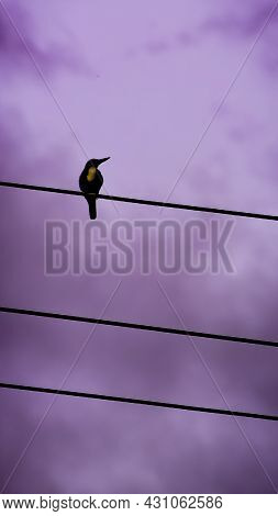 Black Water Bird Perching On Top Of A Electric Power Line In A Clear Sky Background