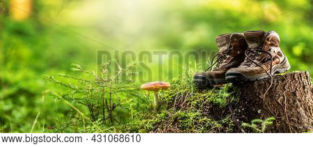 Two Used Hiking Boots Laid In The Woods On A Stump Next To A Toadstool. Horizontal Panoramic Banner.