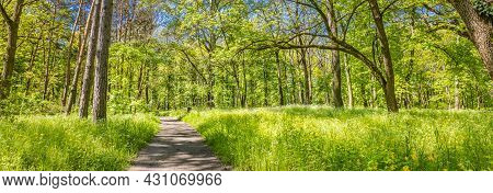 Beautiful Path Though An Ancient Woodland Or Forest In City Park. Beautiful Green Summer Forest Pano
