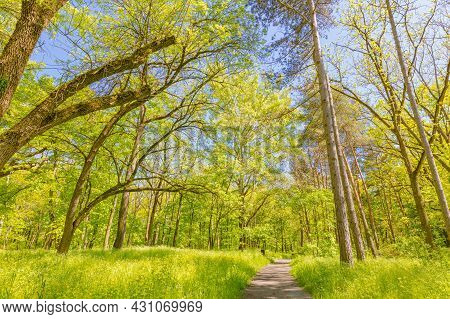Beautiful Path Though An Ancient Woodland Or Forest In City Park. Beautiful Green Summer Forest. Spr