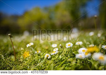 Abstract Soft Focus Daisy Field Landscape Of Yellow Flowers And Grass Meadow Warm Golden Hour Sunset