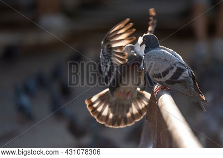 A Pigeon Sitting On The Railing To Which A Bird Flies Up.