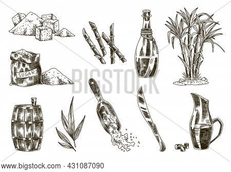 Cane sugar. Set of product from sugarcane plants. Engraving Hand drawn natural organic food and natural ingredients. Fresh squeezed sugarcane in glass, sugar in heap and cubes, bamboo and rum