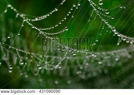 Spider Web With Dewdrops In The Early Morning On The Grass. Selective Focus
