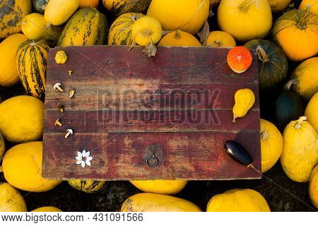 Autumn Frame Composition And Layout Made Of Colorful Pumpkins, Eggplant, Mushrooms, Seeds Aged Vinta